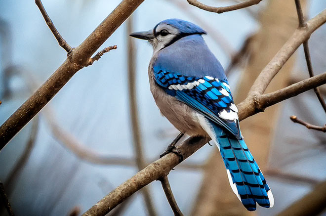Birds in Virginia Lodge