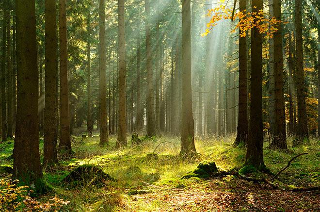 Forest near Virginia Lodge