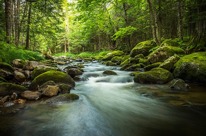 Stream Ecology of Virginia Lodge